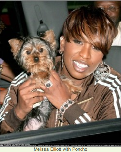 missy elliott and yorkie