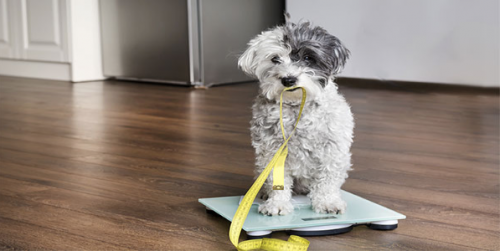 monitor your dogs weight