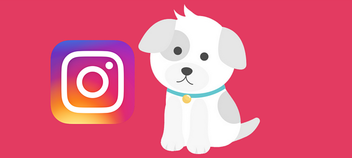Check out these cute morkies on instagram