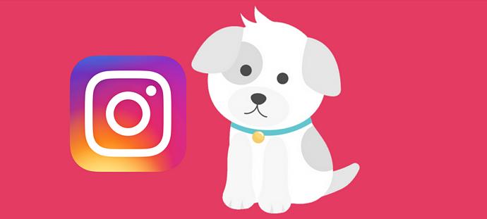 Cutie Morkies on Instagram