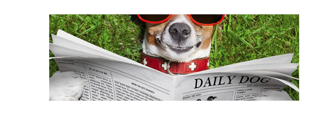 News dog: pups in the news