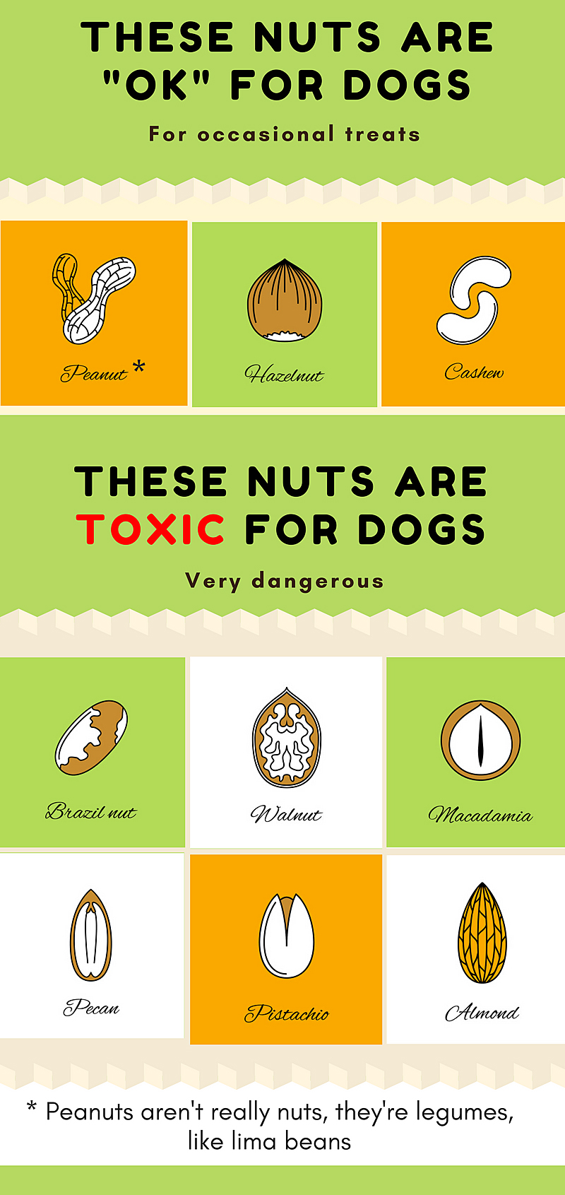 Nuts that are safe for dogs and nuts that are toxic for dogs
