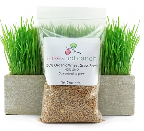 organic wheat grass for your or for your dog or cat
