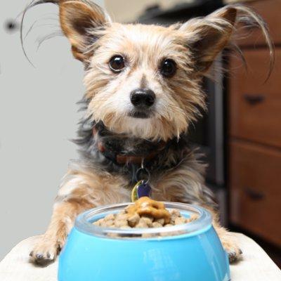pet food treats in a dog bowl