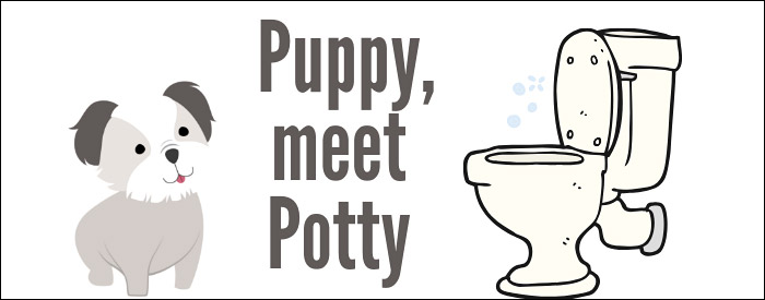 How to potty train a Morkie puppy