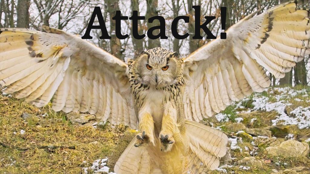predator bird attacks dog
