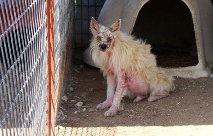 Puppy mills victim