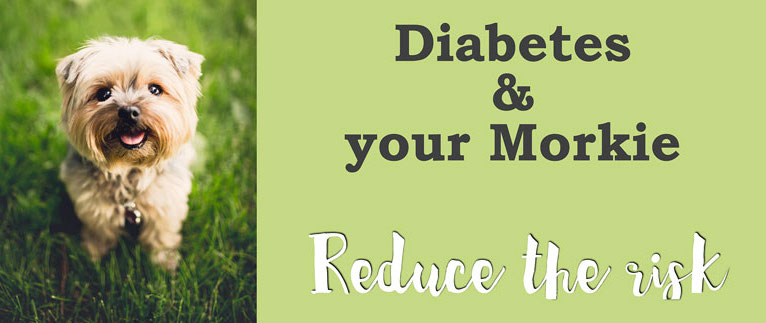 reduce the risk of diabetes in your dog