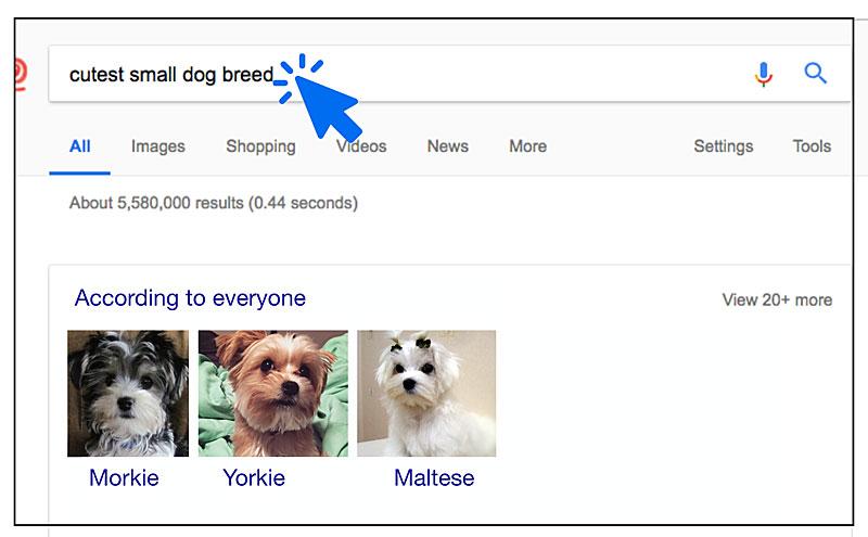 google cutest dogs