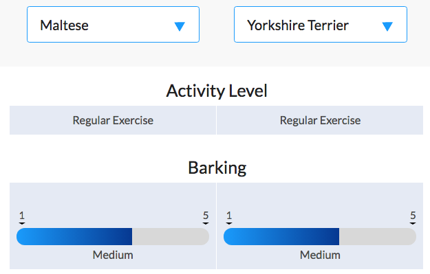 yorkshire terrier standards compared to maltese