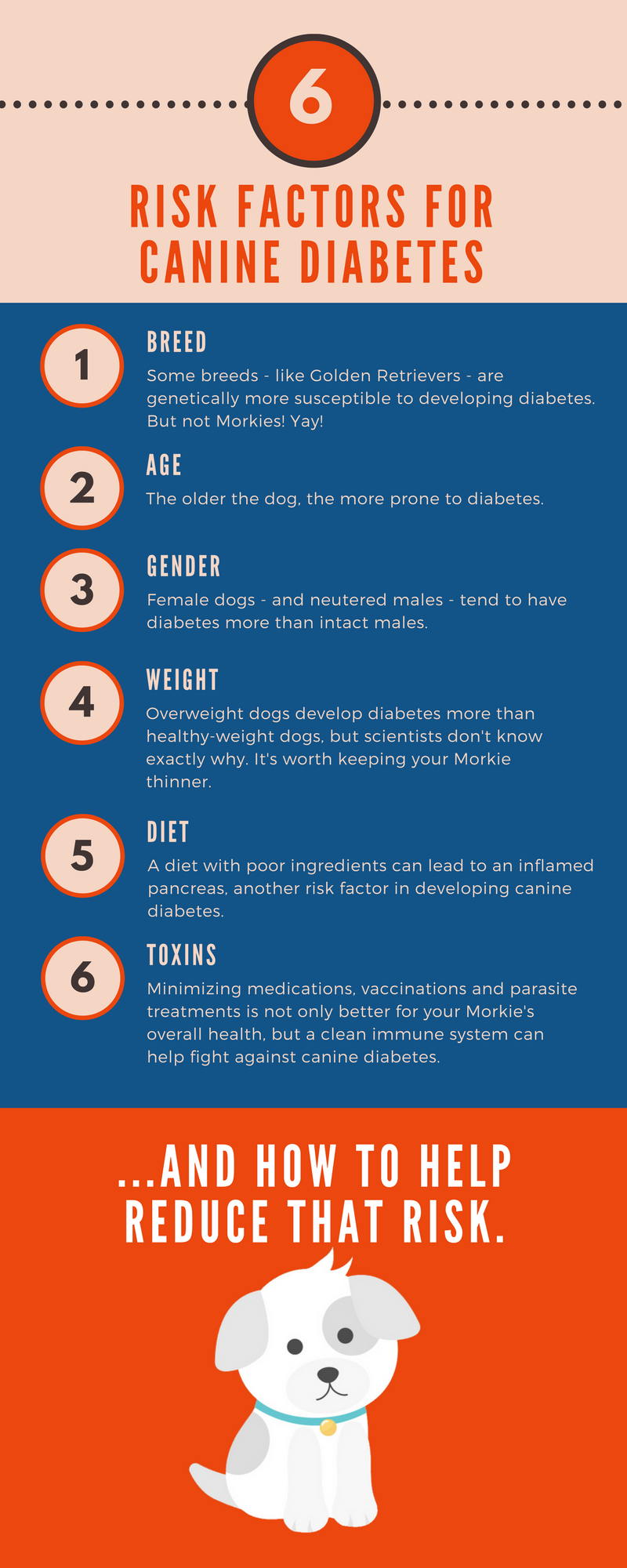 Infographic showing all the risk factors for canine diabetes: breed, age, gender, weight, diet and toxins.