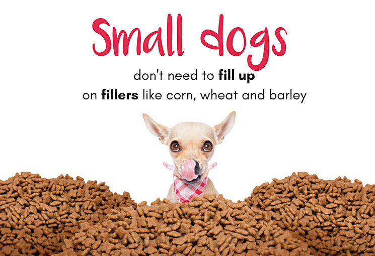 Small dogs don't need fillers in their food