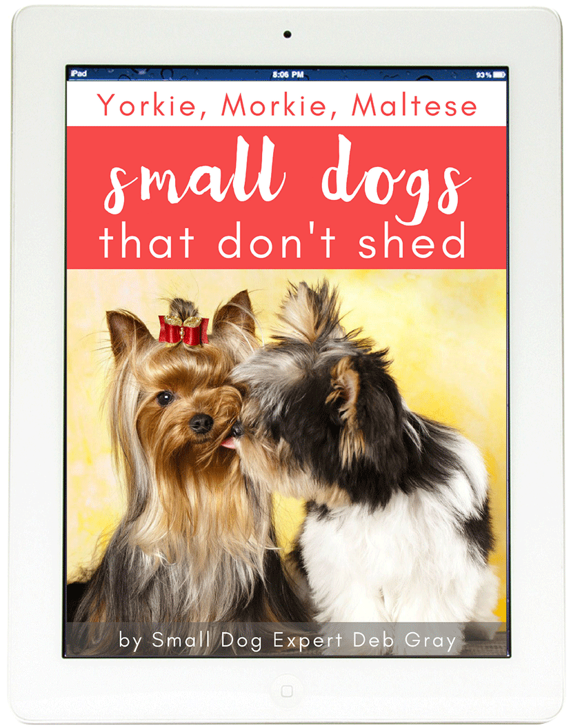 Morkie, Yorkie and Maltese - small dogs that don't shed ebook
