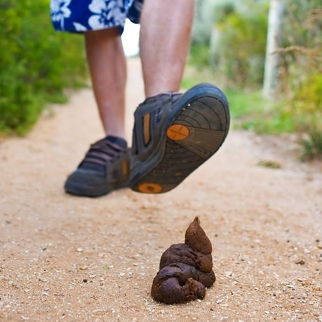 stepping in dog poop