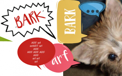 Morkie lovers: how to stop a dog from barking