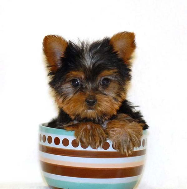 How Big Will My Puppy Get How Much Will My Puppy Weigh Read More