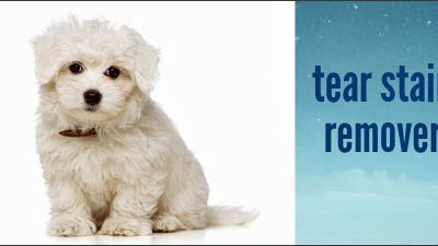 Clean stains around your Morkie's eyes