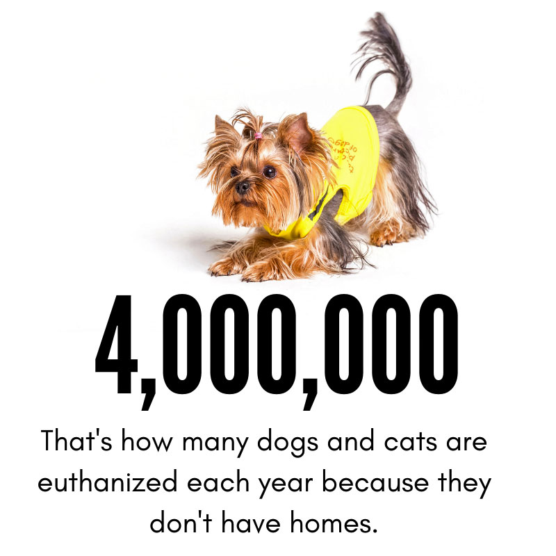 there are too many dogs in the world