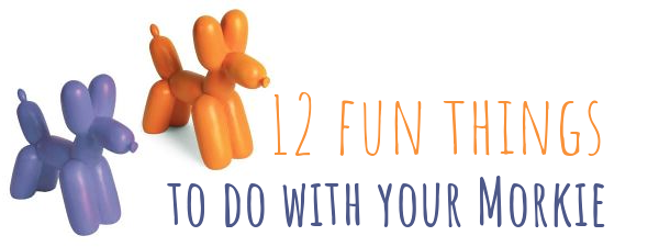 12 Fun Things to Do with Your Morkie