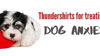 Thundershirt for Dogs
