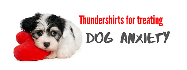 thundershirt can be effective for dog anxiety