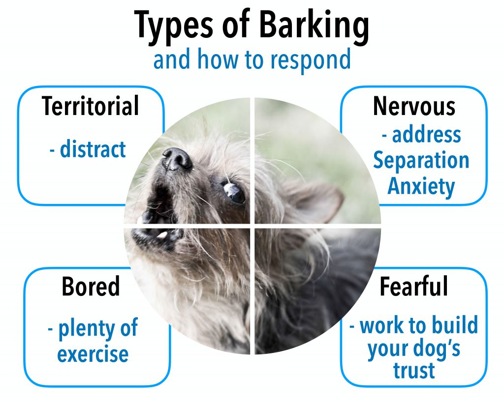 problem when the barking becomes loud, unwanted, inappropriate or excessive.