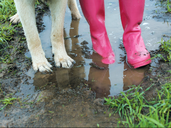 walking dogs in the mud