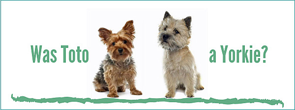 was toto a yorkie?