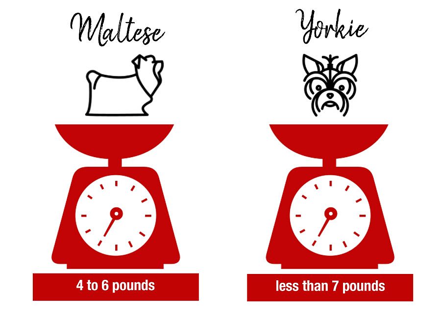 weight of yorkies and maltese