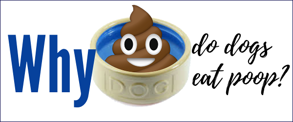 why do dogs eat poop a funny illustration