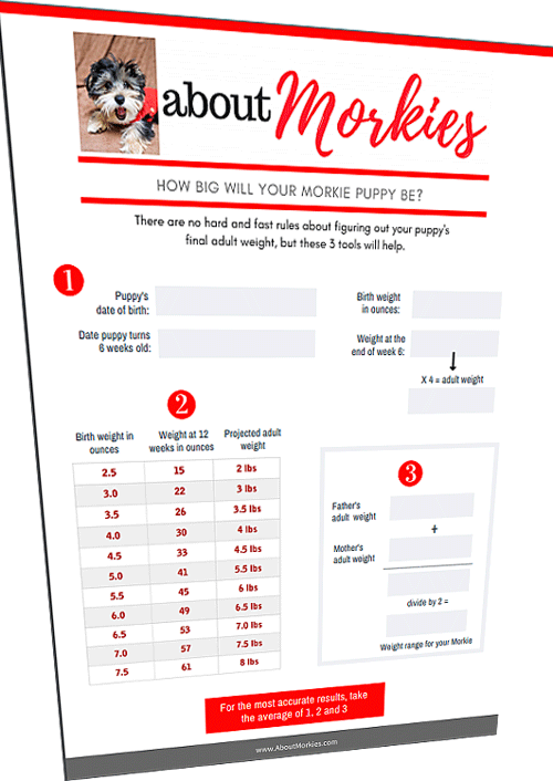 morkie worksheet