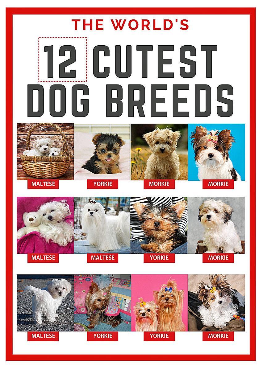 Cutest small dog breeds - Yorkie Morkie Maltese