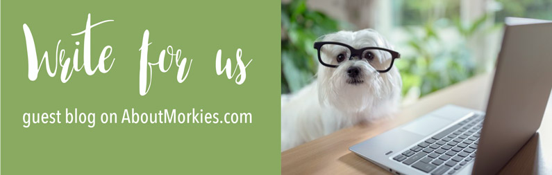 Write for Us | ABOUT MORKIES