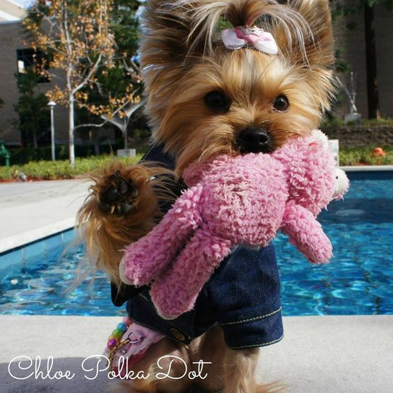 cute dog with a toy