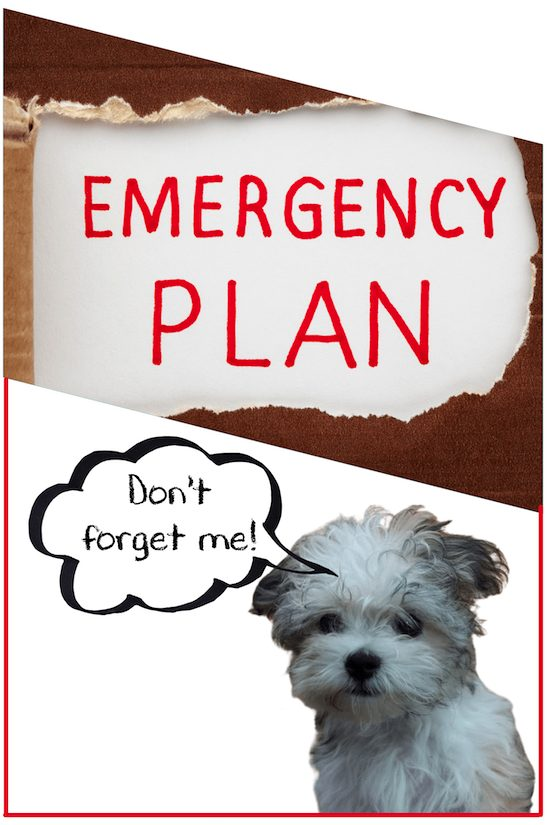yorkie maltese emergency planning